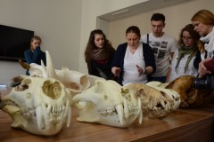 Týden vědy a techniky: předvádění, co lze vyčíst z kostí